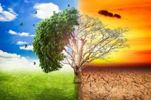 17 ЧЕРВНЯ — ВСЕСВІТНІЙ ДЕНЬ БОРОТЬБИ ІЗ ОПУСТЕЛЮВАННЯМ ТА ПОСУХАМИ