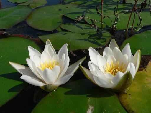 Всесвітній день водно-болотних угідь